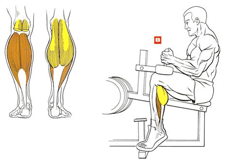 Как накачать икру ног в домашних условиях